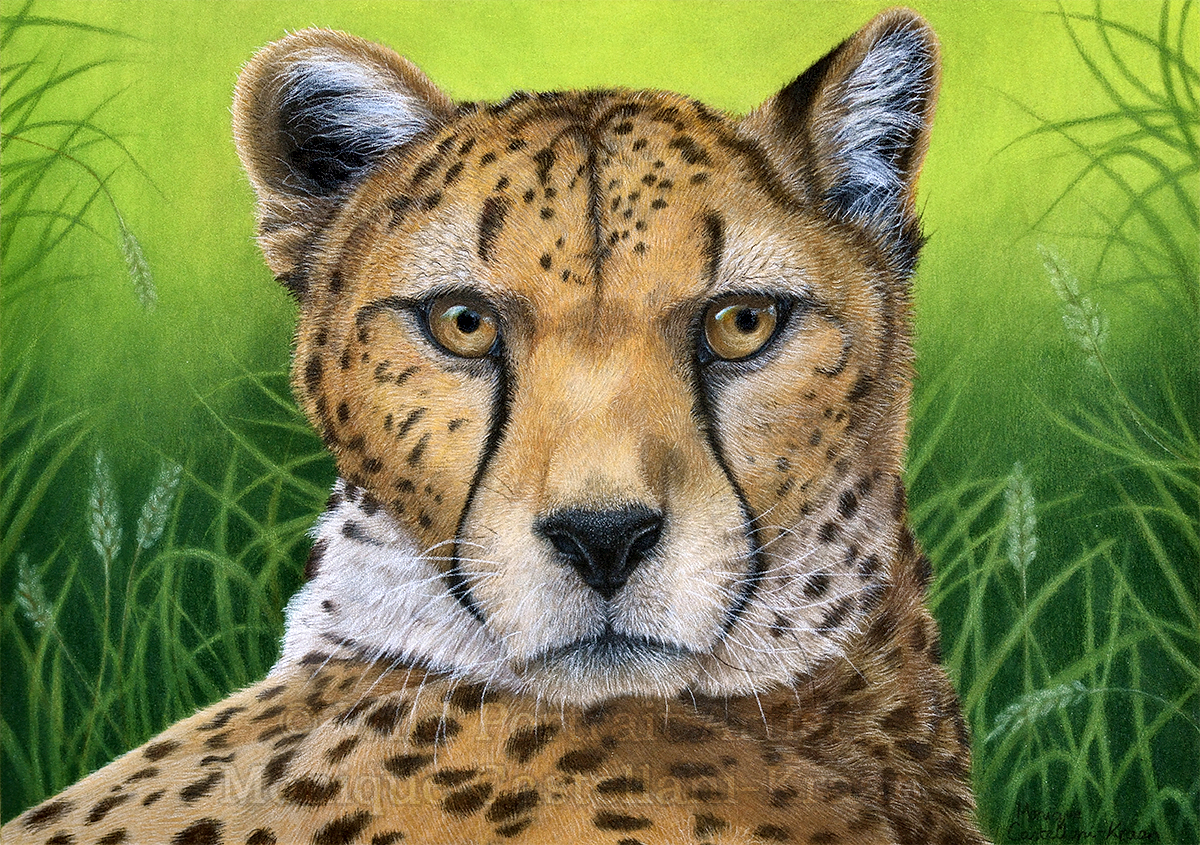 """Relaxed Afternoon"" 42 x 29.7cm coloured pencil drawing on UArt 600 Sanded paper using powder blender. Own ref photo used. Art by Wild Portrait Artist. Available for sale."