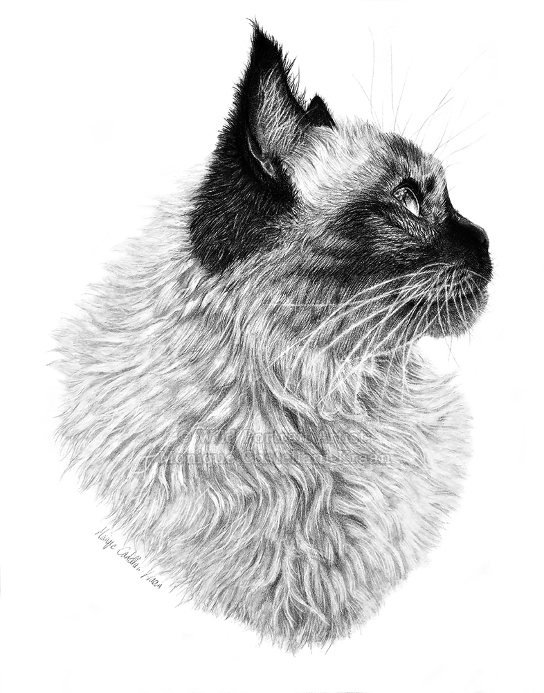 """Suki"" - 11 x 14 inches, Staedtler Mars Lumograph pencils on Strathmore Bristol Vellum. Art by Wild Portrait Artist."